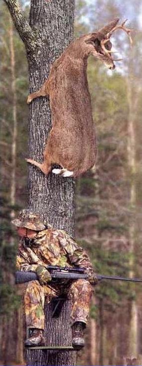 Photos Humour : Le chasseur