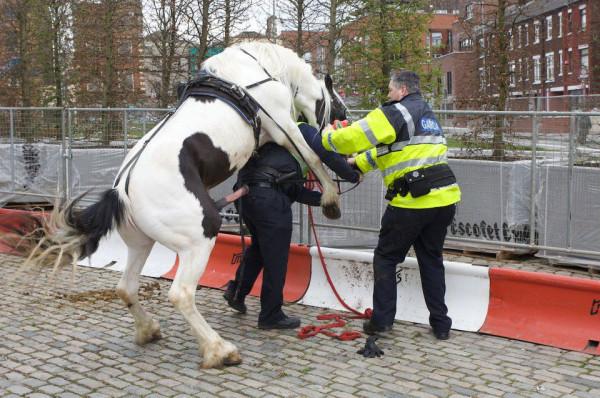 Pour-quoi-les-anglais-aiment-tant-les-chevaux-l