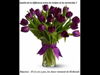 Diff rence entre les tulipes et les emmerdes photos humour for Difference entre pyrolyse et catalyse
