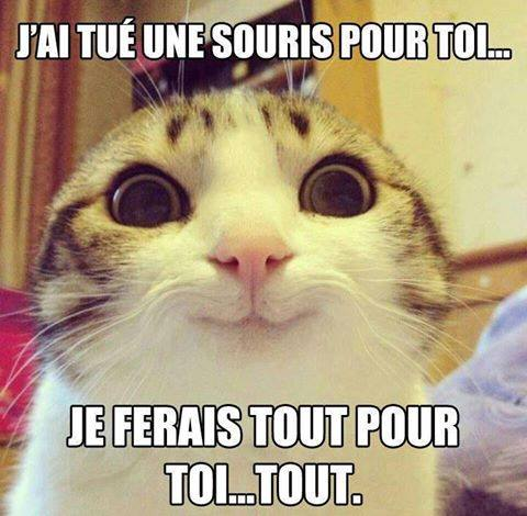 Vive les Chats! - Photos Humour