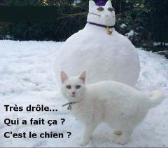 Bonhomme chat - Photos Humour