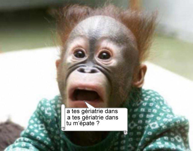 singe-drole - Photos Humour