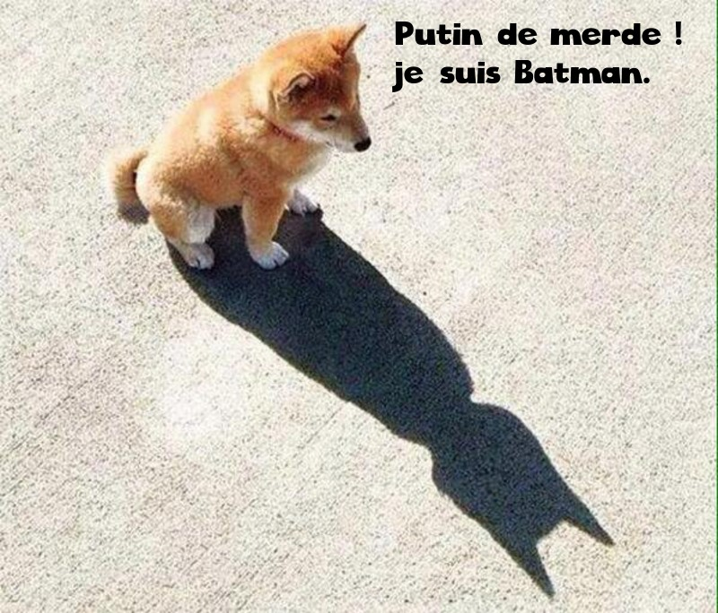 Batman photos humour for Je te transmet
