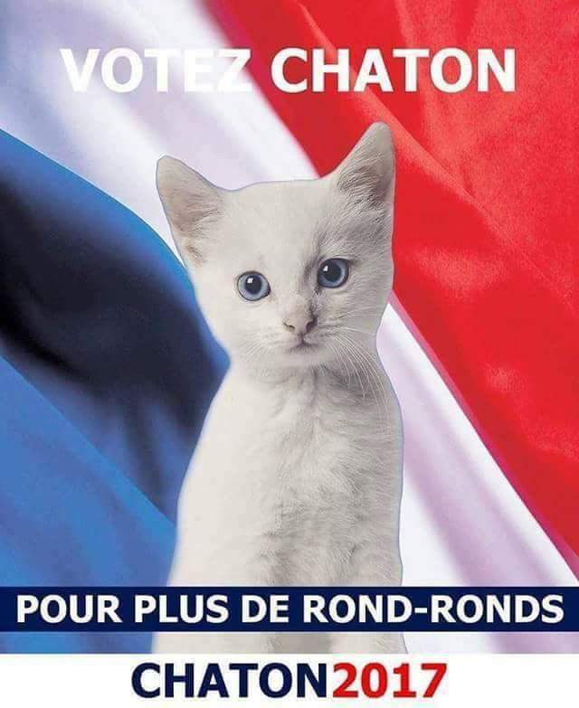 Photos Humour : Votez Chaton !