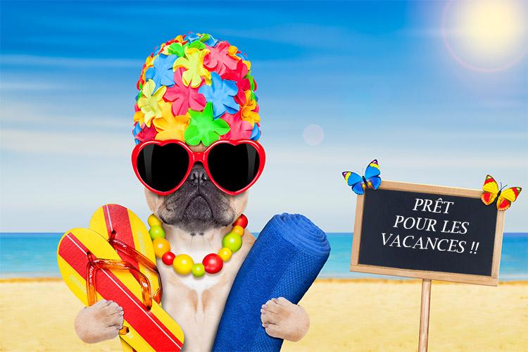 Bonnes Vacances - Photos Humour