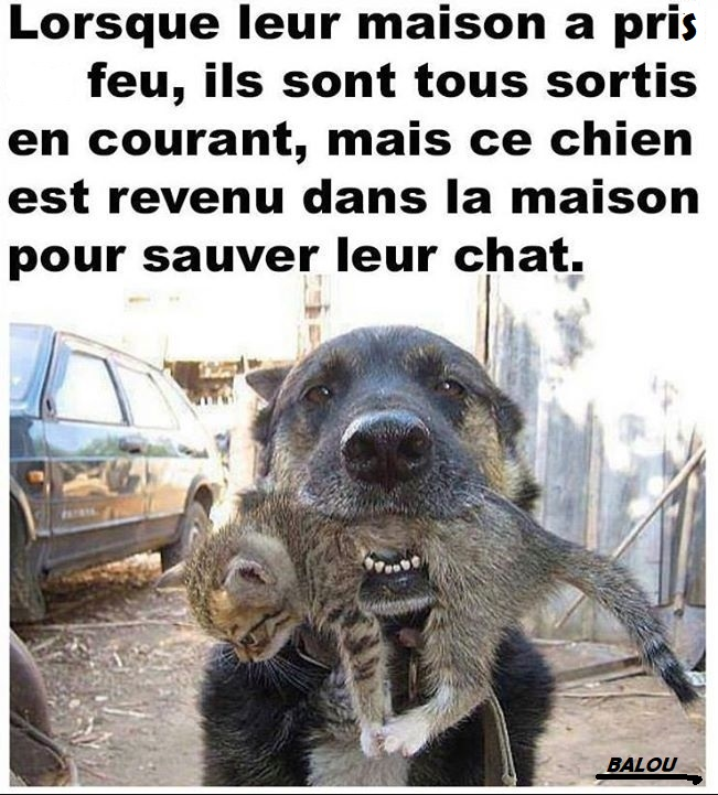 🐶BRAVO LE CHIEN - Photos Humour