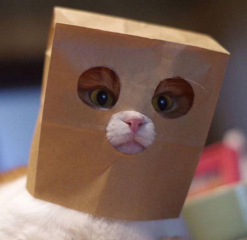 bichette masquée - Photos Humour