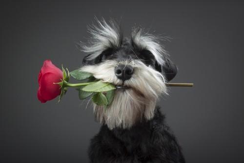Blackyoffre une fleur à Bichette - Photos Humour