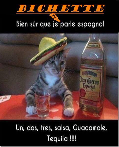 BUENAS NOCHES🐱 - Photos Humour