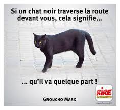 chat noir - Photos Humour