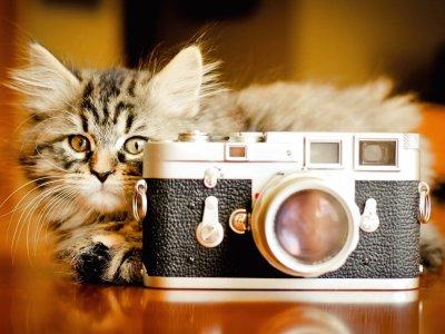 paparazzi? - Photos Humour