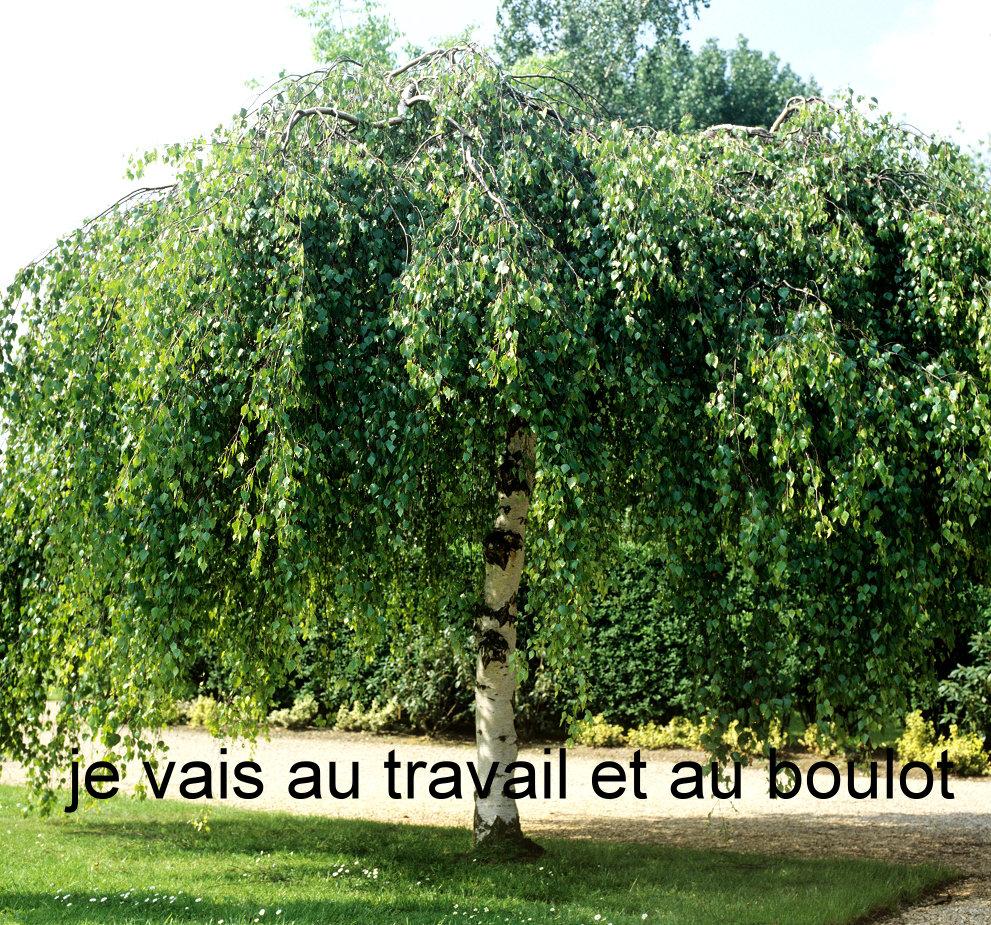 boulot - Photos Humour