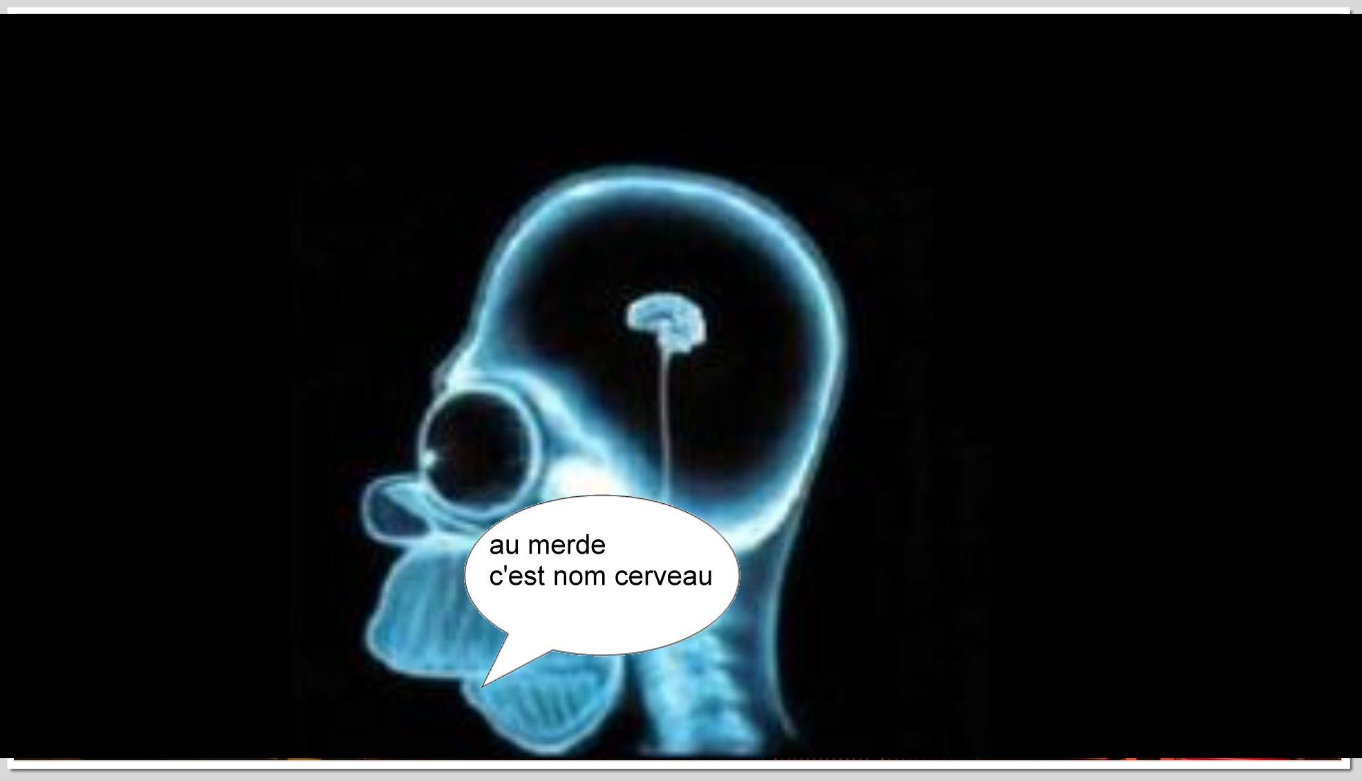 cerveau - Photos Humour