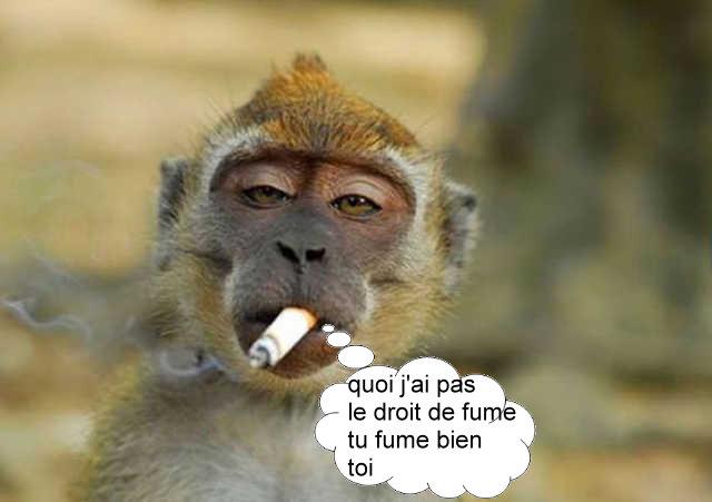 fumer - Photos Humour
