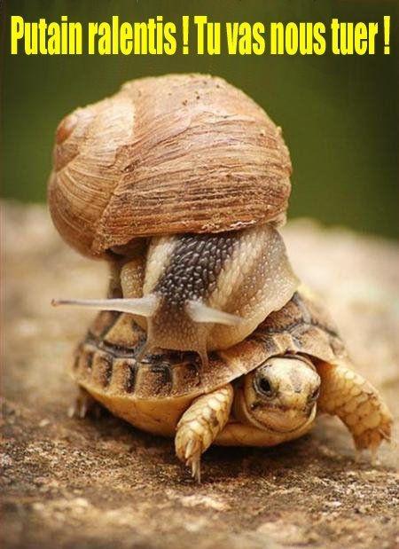 [Image: Tortue-escargot.jpg]