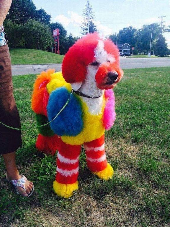 chien multicolore nommé Mac Do - Photos Humour