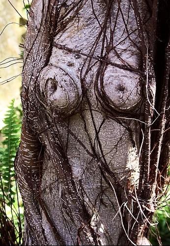 arbre sien - Photos Humour