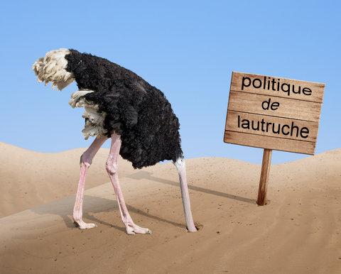 Photos Humour : autruche