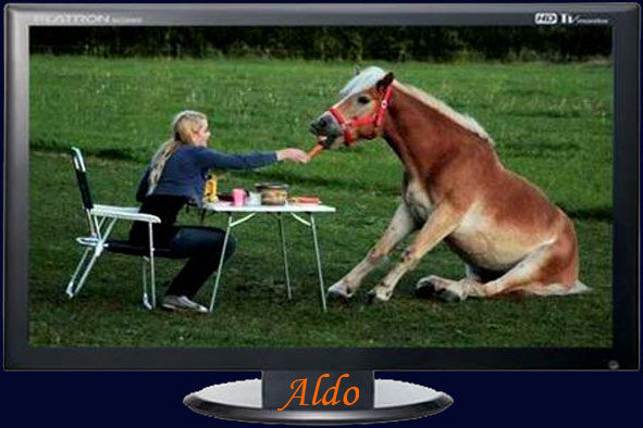 cheval petit déjeune - Photos Humour