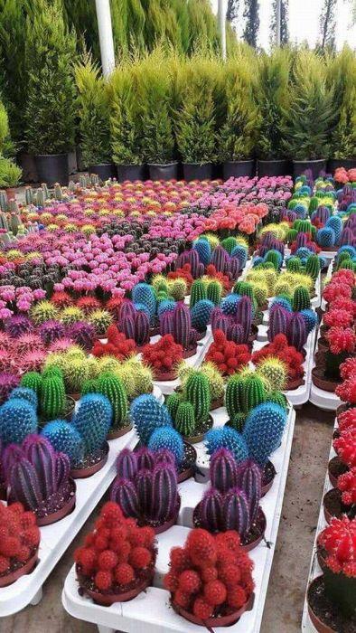 Photos Humour : De toutes les couleurs ? ...