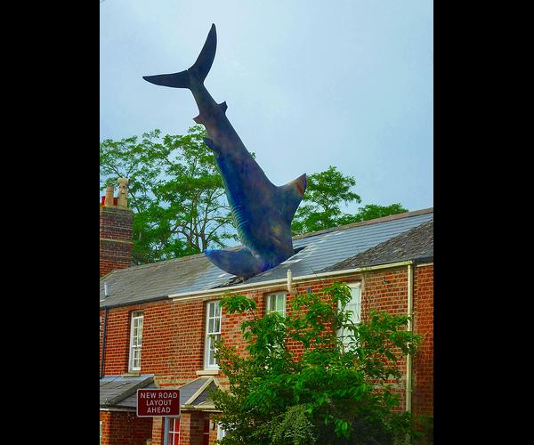 requin sur toi - Photos Humour