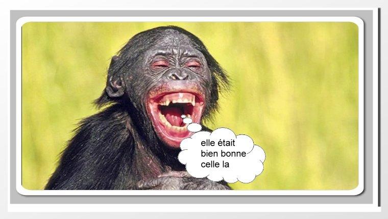 Singe_rire - Photos Humour