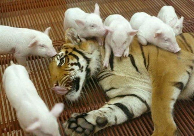 Photos Humour : Ils sont encore trop petits  ? ...