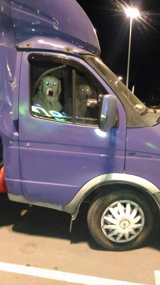 Photos Humour : La révolution canine a commencé !