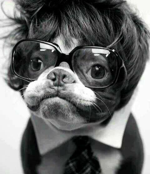 Photos Humour : On dit parfois tel Maître, tel chien non