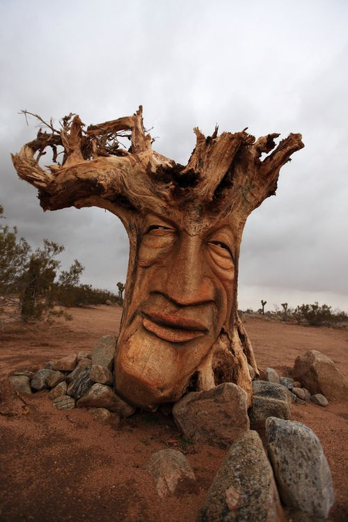 Photos Humour : arbre visage