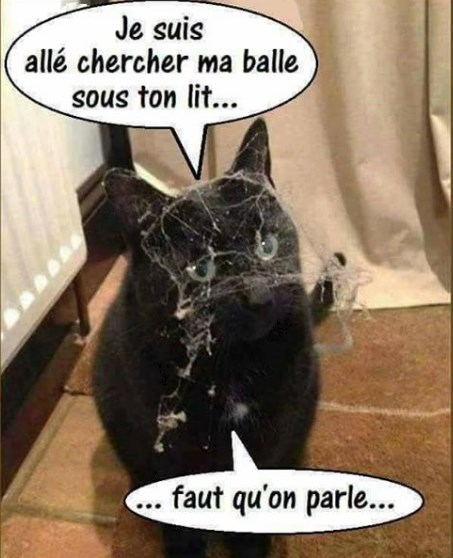 Photos Humour : chat de ménage