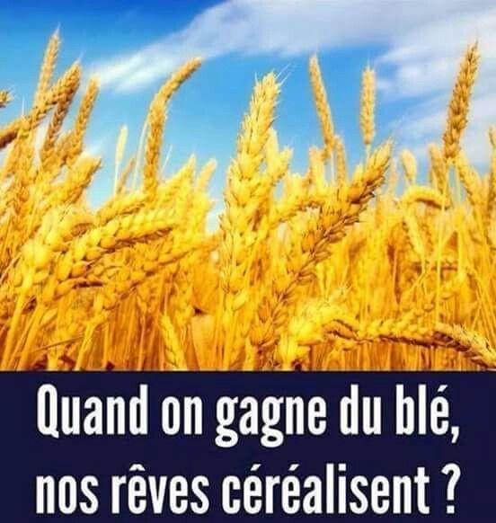 Photos Humour : Quand on gagne du blé