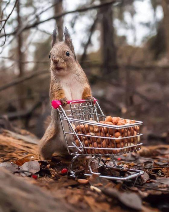 Photos Humour : Quelques petites courses  ? …