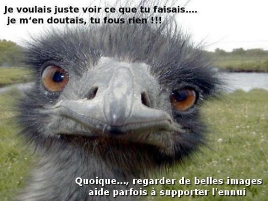 Photos Humour : regard