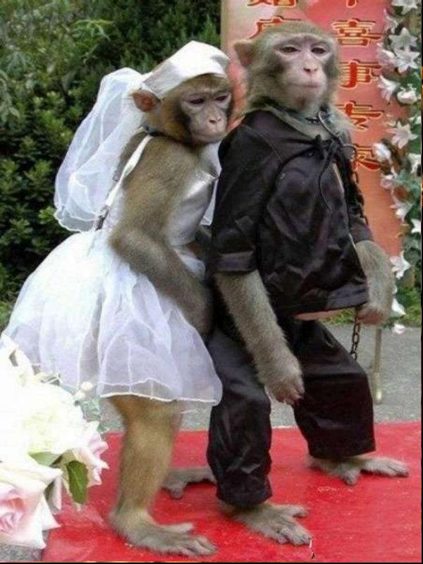 Photos Humour : le plus beau mariage du monde
