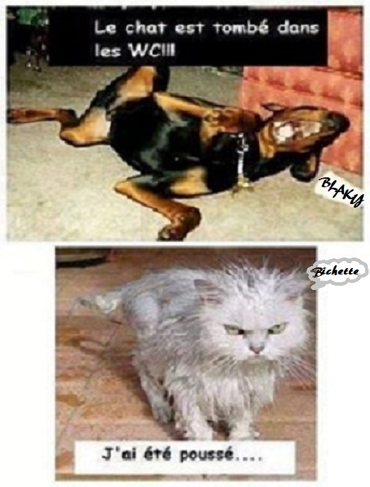 Photos Humour : PAUVRE BIBICHE 🐱