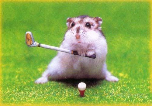 Photos Humour : rogneur joue au golf