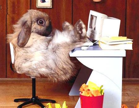 Photos Humour : un lapin sur son ordinateur