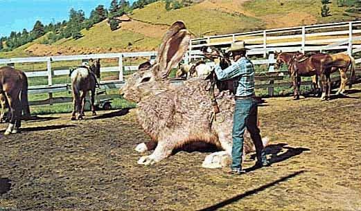 Photos Humour : gros lapin