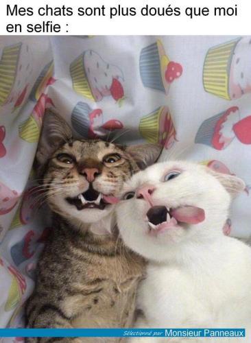 Photos Humour : Mes chats sont plus doués que moi en sel fie