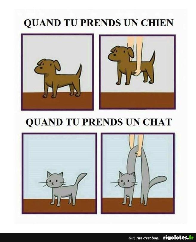 Photos Humour : prendre chat ou chien