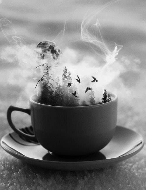 Photos Humour : Besoin de café, et d
