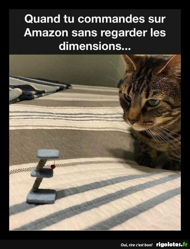 Photos Humour : jeu pour puces
