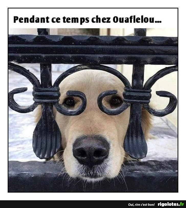 Photos Humour : lunettes à chien