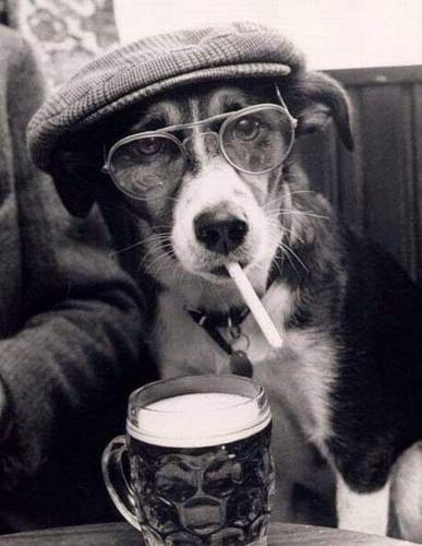 Photos Humour : Une petit bière