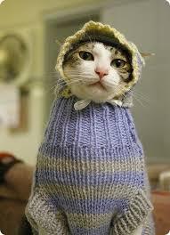 Photos Humour : Bon Bichette elle a tenté le tricot