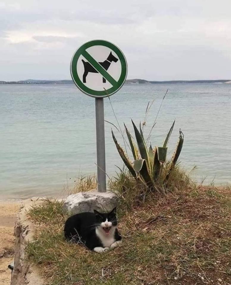 Photos Humour : interdit aux chiens