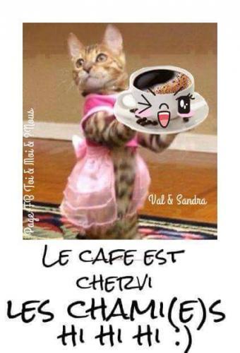 Photos Humour : le café