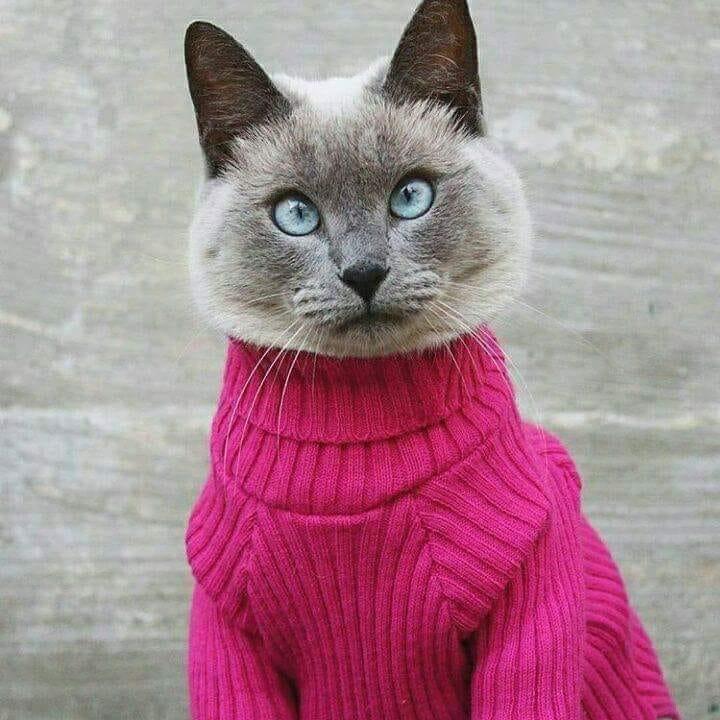Photos Humour : Nonnnnnn , Bichette pas ce pull