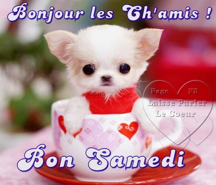 Photos Humour : Bonjour les Ch